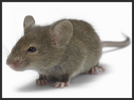 Mouse Control Services London